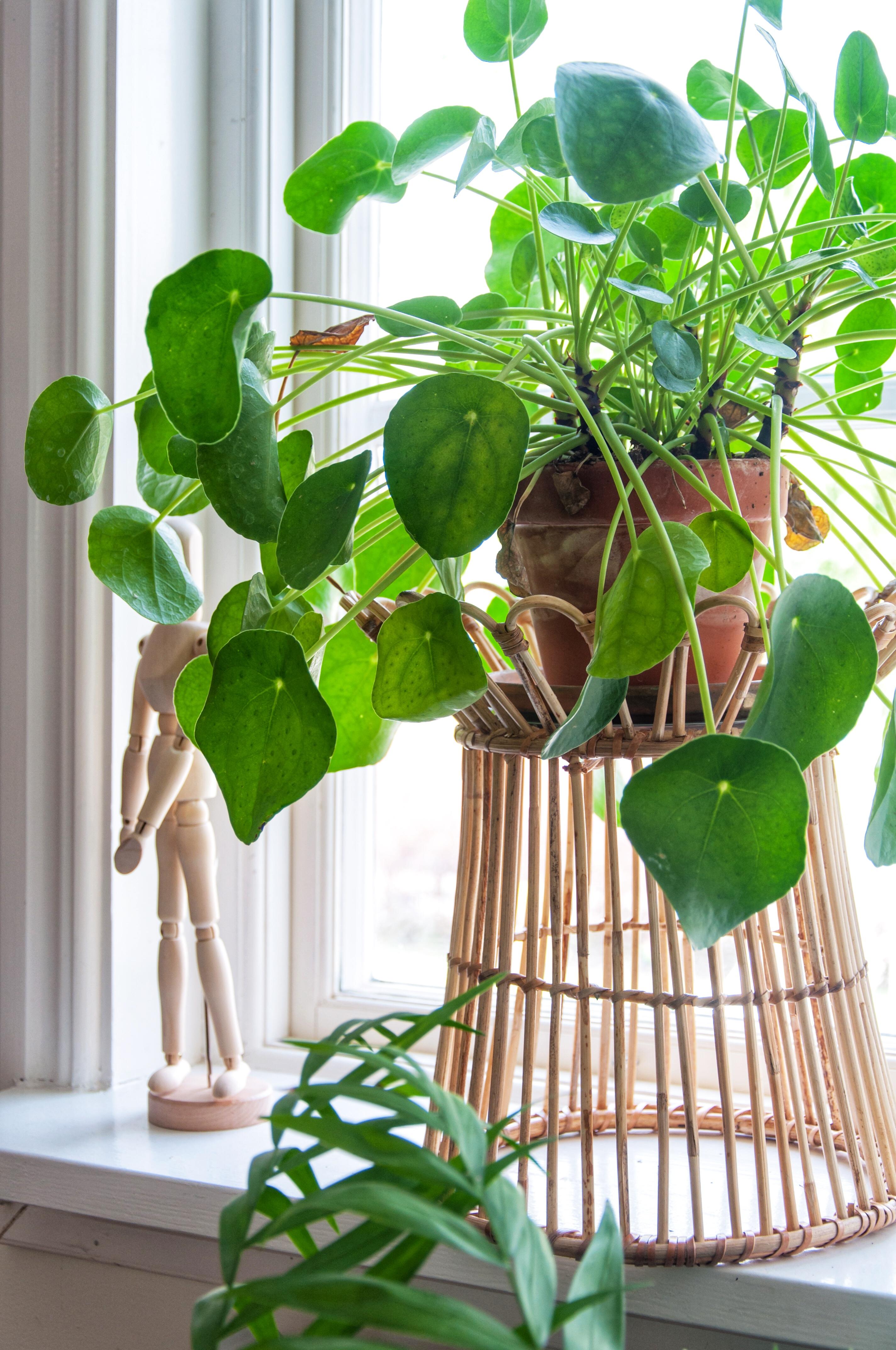 Att inreda med gröna växter - Leonor Juhl K, Fröken Turkos