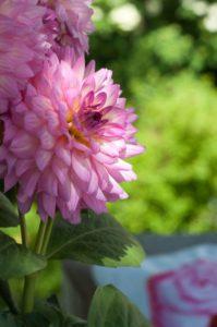 En rosa dröm av sommarblommor