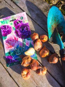 Sista minuten – Planteringstips för vårlökar!