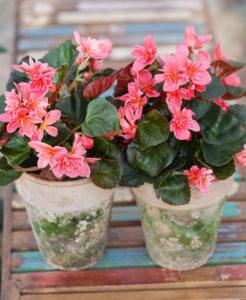 Så tar du hand om dina vinterdeppiga krukväxter