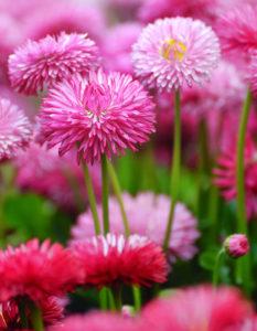 Plantera – Sätt våren i kruka