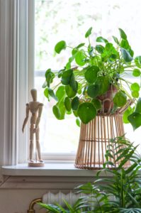 Att inreda med gröna växter