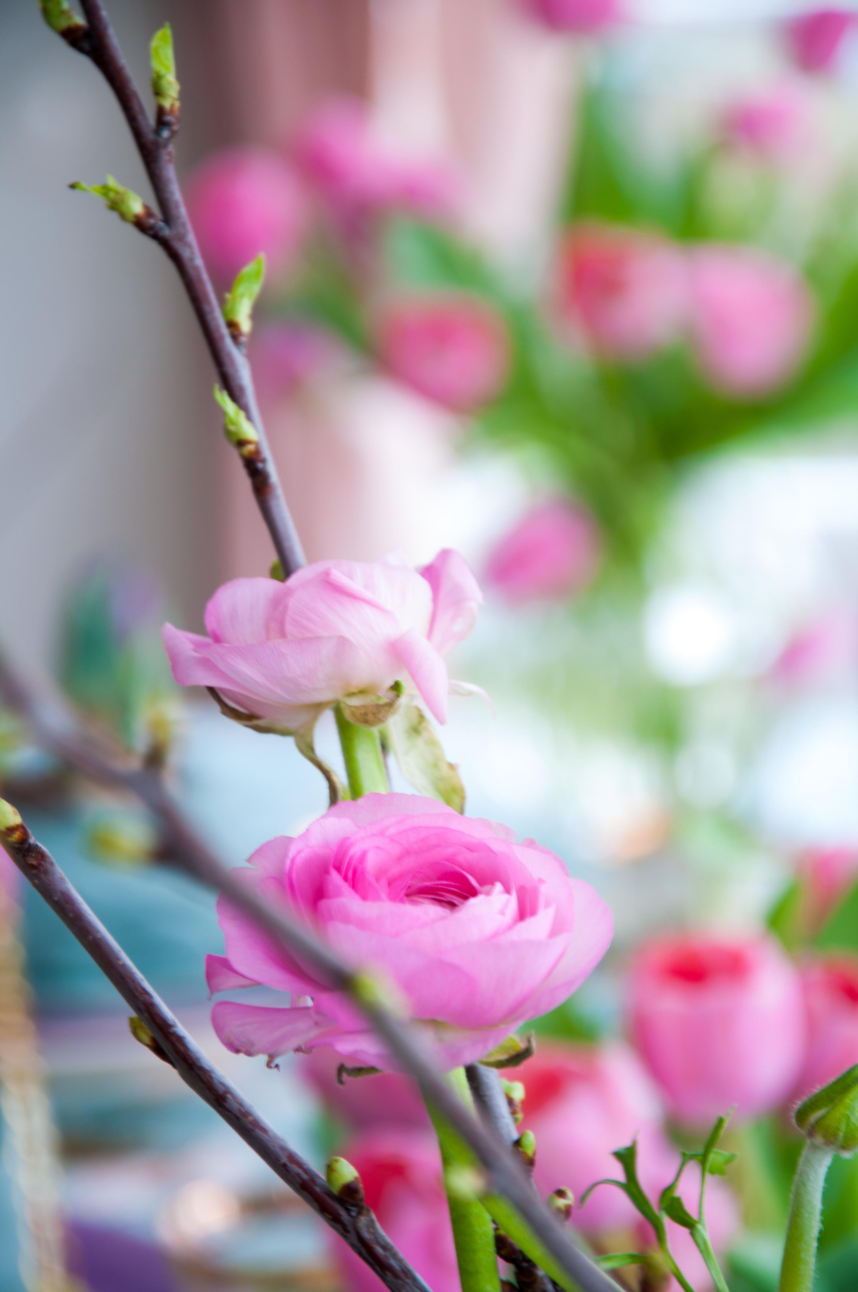 Plocka in och driv kvistar - Leonor Juhl K