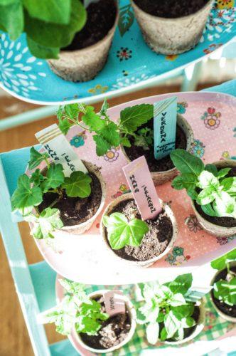 Så planterar du dina sticklingar!