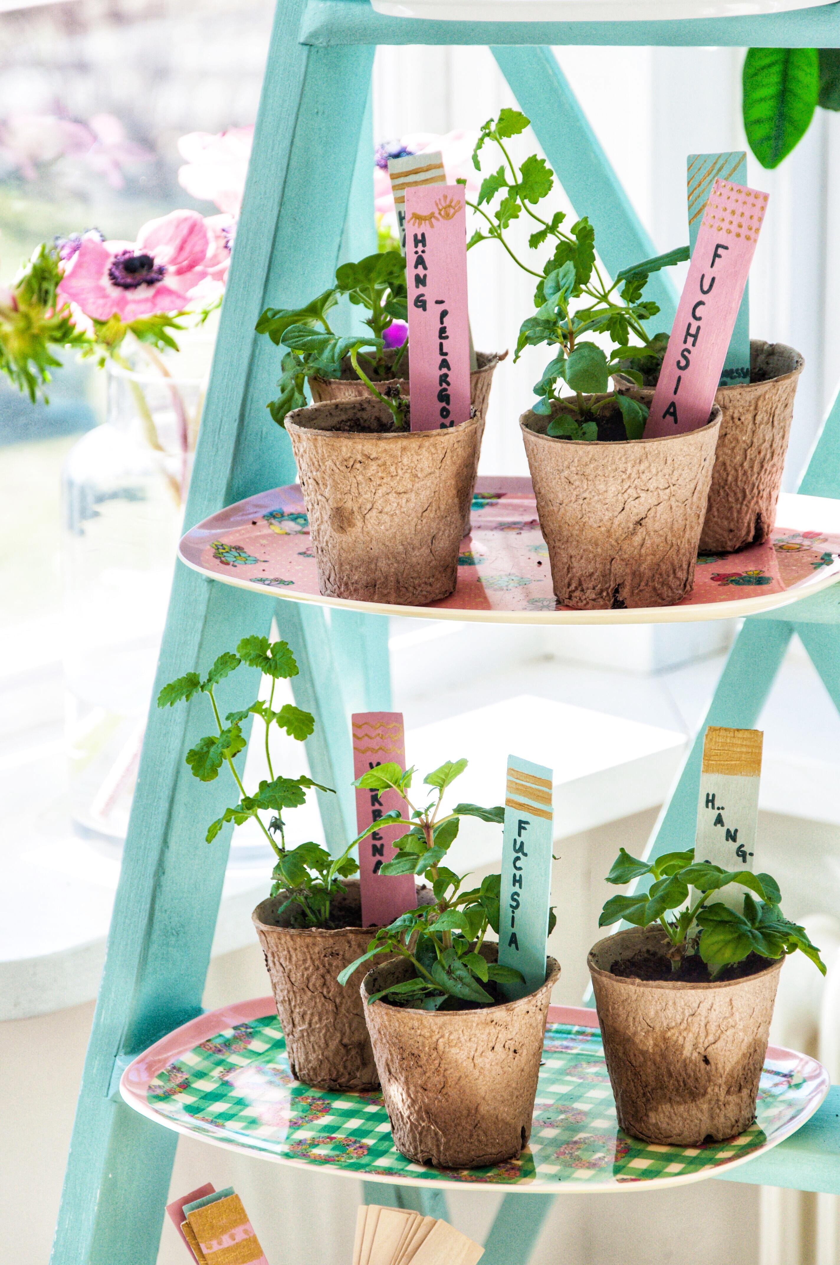 Så planterar du dina sticklingar - Fröken Turkos - Leonor Juhl K