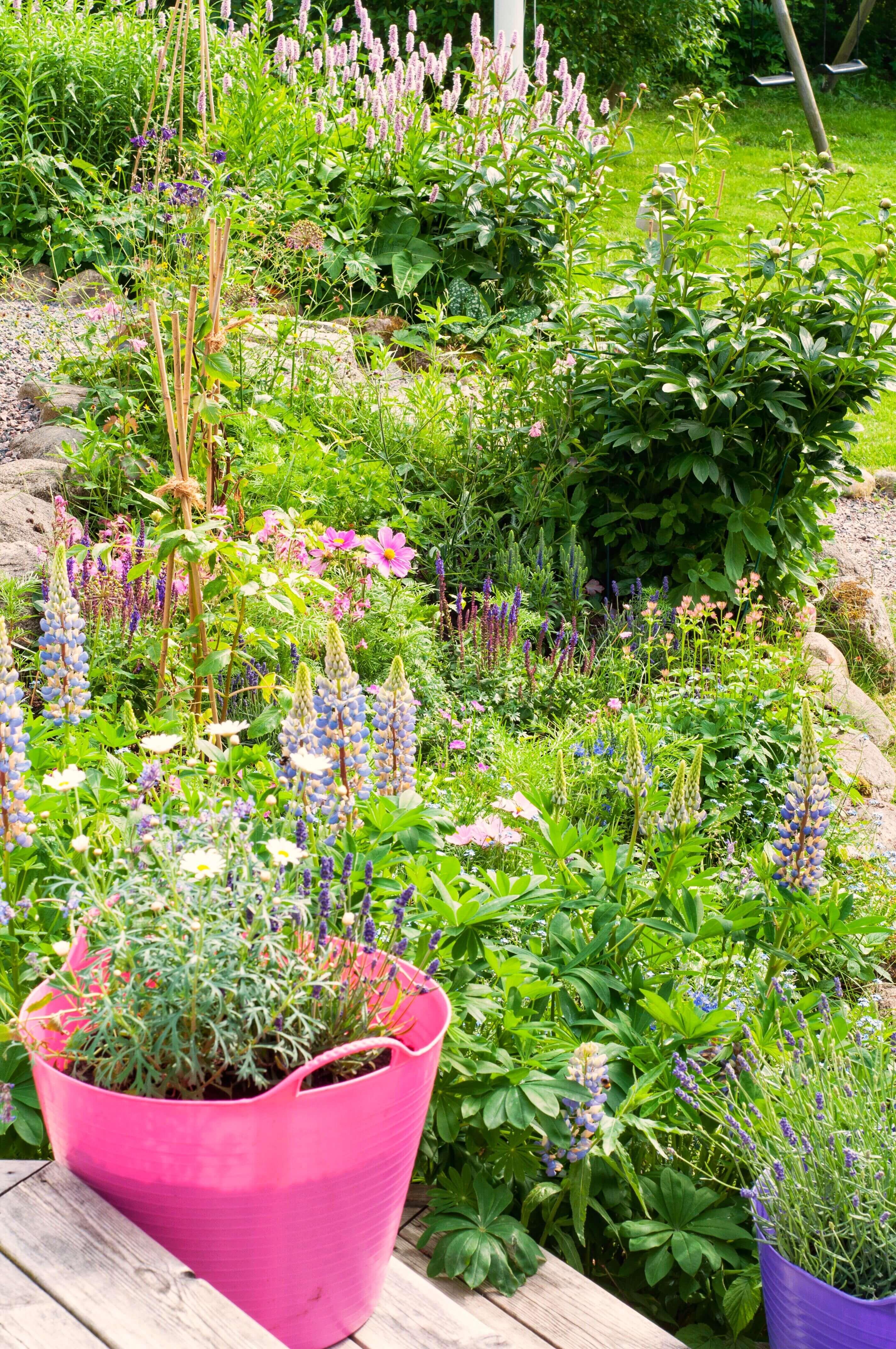 Trädgård - Nilssons plantskola - blommor och bin, Leonor Juhl K - Fröken Turkos