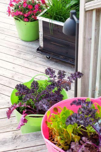5 goda örter som kryddar din uteplats i sommar