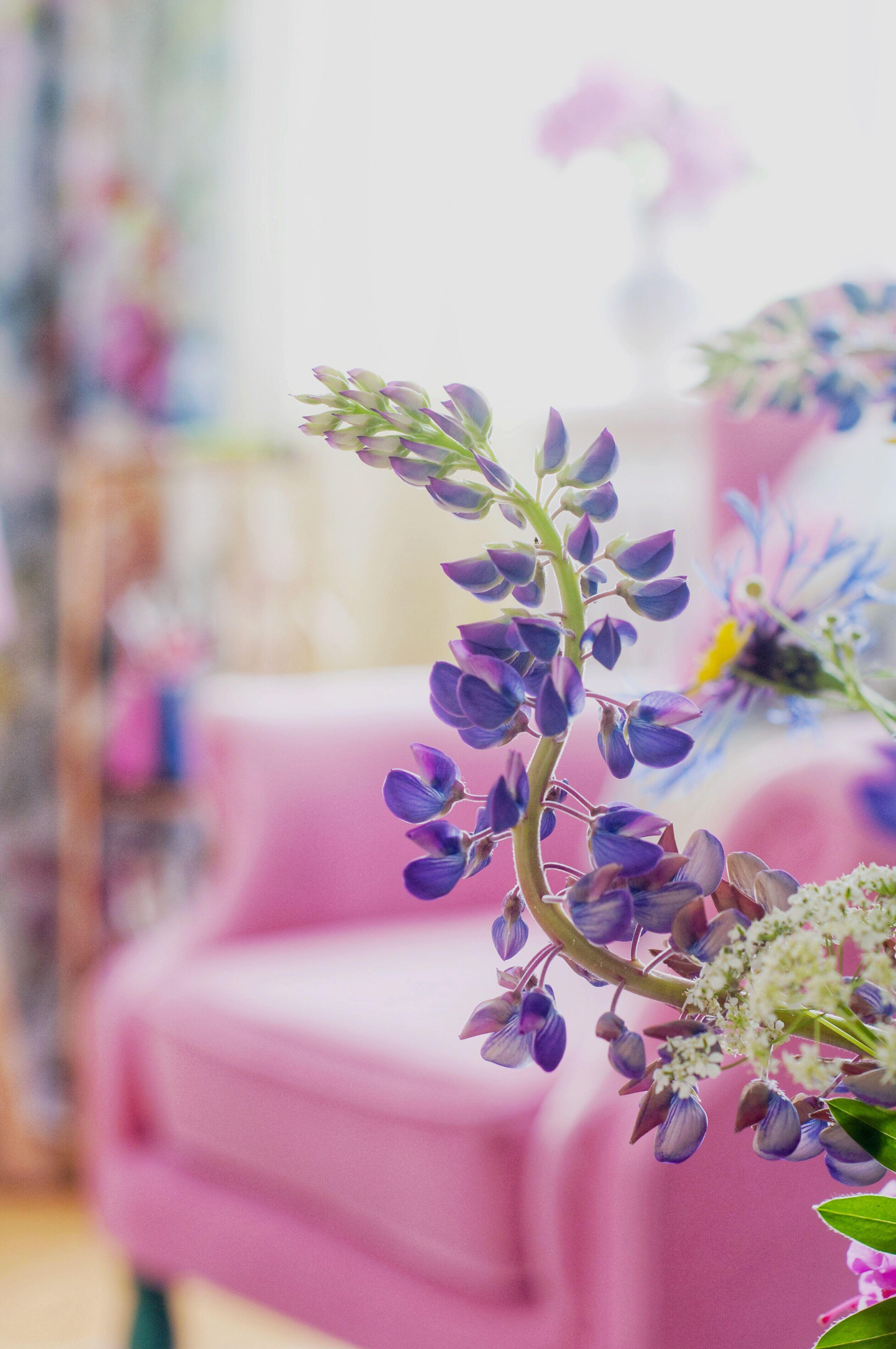 Inred med färg - så skapar du ett unikt och personligt hem av Leonor Juhl